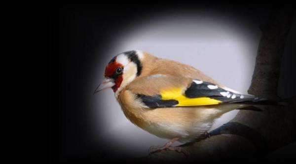 Oiseau_1.jpg