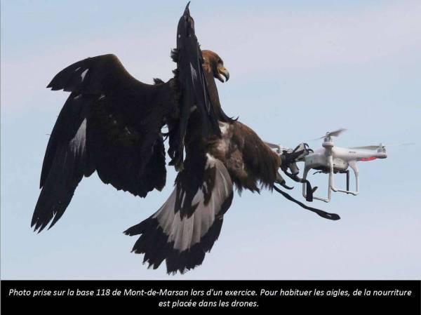Drone et Aigle.JPG