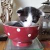 Nouvel video de Tipo mon chaton. - dernier message par Pigaro